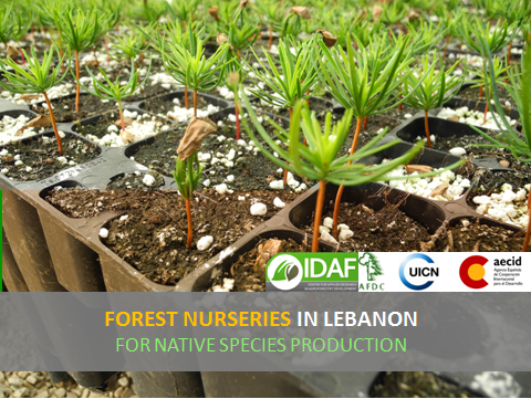 "Imagen Elaboración del Libro Técnico ""Forest Nurseries in Lebanon for Native Species Production"""
